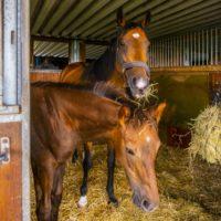 馬を飼育するには費用はどのくらいかかる?市への許可や注意点について