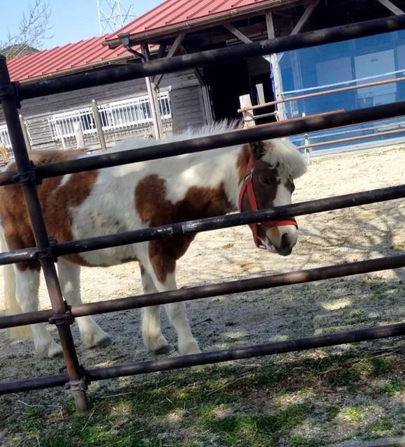 モーモーランド 馬