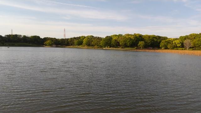 大泉緑地公園の池