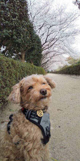 赤城山 犬の散歩